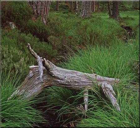 Better Landscape Photography 13