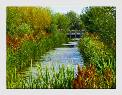 London Wetland Centre - Barnes