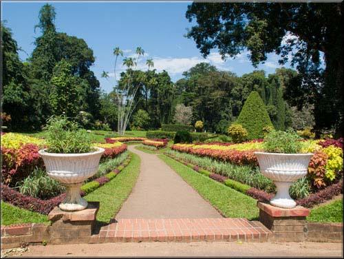 Olympus PEN - Kandy Botanical Gardens