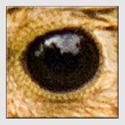 Swarovski Spotting Scope - f10.0 1/100 ISO800