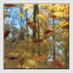 Autumn Photographs