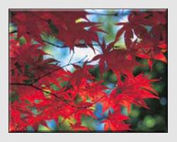 Autumn Photographs
