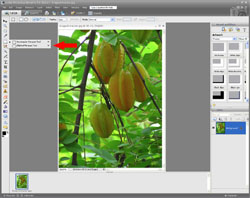 Image Extraction PE Screen 1