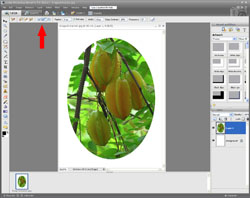 Image Extraction PE Screen 10