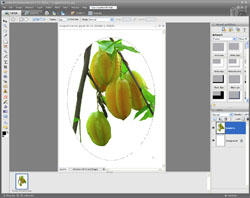 Image Extraction PE Screen 11