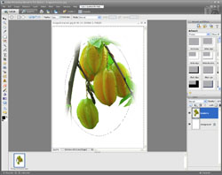Image Extraction PE Screen 15