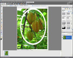 Image Extraction PE Screen 2