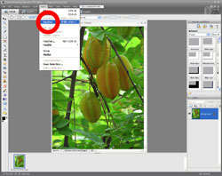 Image Extraction PE Screen 3