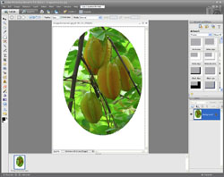 Image Extraction PE Screen 4