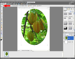 Image Extraction PE Screen 6