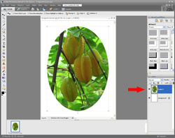 Image Extraction PE Screen 7
