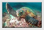 Mastering Underwater Photography