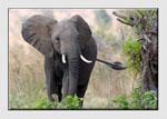 Wildlife Pictures Masterclass