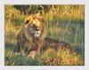 Photography Tutor - African Safari