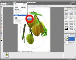 Image Extraction PE Screen 12