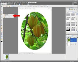 Image Extraction PE Screen 8