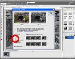 Monochrome Conversion PE Screen 2