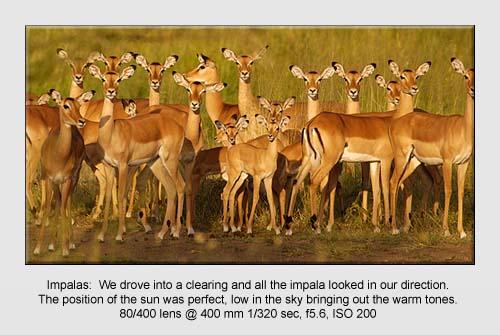 Wildlife Pictures